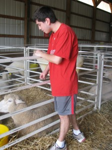Clay petting sheep
