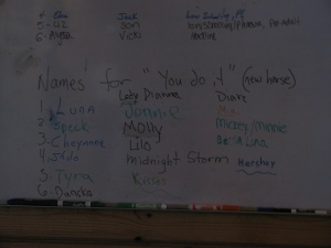 list of horse names on white board