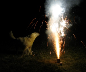 Dog barking at fireworks