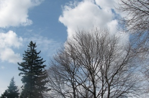 Tops of trees